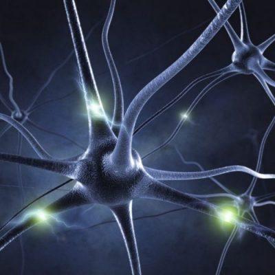 Nervensystem Harmonie, sehr gut für HSP und Menschen mit Nervenbeschwerden